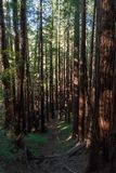 Muir Woods National Monument royalty free stock photos