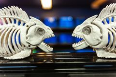 Fish skeleton plastic figurines pictured in front of aquariums full of fish 3/4 stock photos