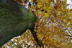 Leaves and trees at autumn. Picture is taken in 2017. It shows some leaves and trees in autumn Royalty Free Stock Photography