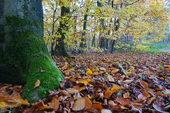 Leaves and trees at autumn. Picture is taken in 2017. It shows some leaves and trees in autumn Stock Photo
