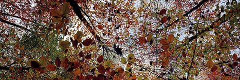 Leaves and trees at autumn. Picture is taken in 2017. It shows some leaves and trees in autumn Stock Image