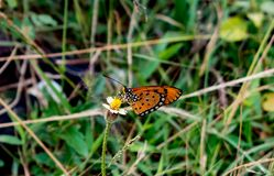 Butterfly Sitting On A Flower royalty free stock photos