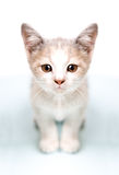 Picture of thoughtful cute kitten Royalty Free Stock Photos