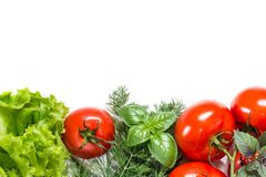 Picture with tomatoes. Stock Image