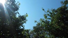 Tree and blue sky royalty free stock photo