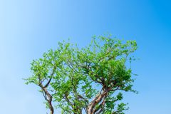 Picture of a tree branch with a sky as the background stock photography