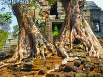 The picture of trees and temple, Angkor, Cambodia. The picture of trees and old temple, Angkor, Cambodia Royalty Free Stock Image