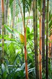 Picture of tropical forest Royalty Free Stock Photo