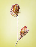 Picture of the twig by spring season, natural scene Royalty Free Stock Images