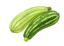 Picture of two zucchini Stock Photos