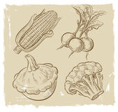 Picture of vegetables Royalty Free Stock Photography