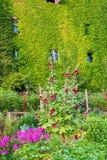 Vine-clad farm building with cottage garden. Picture of a vine-clad farm building with cottage garden Stock Image