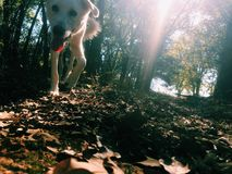 Picture w/ doggy. Perspective picture with dog and sun rays shining through stock photography