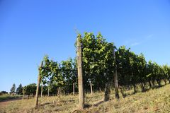 Travel Europe- Vineyards and orchards stock photo