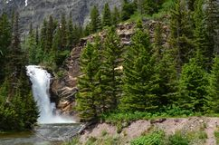Evergreens by a majestic waterfall ! stock image