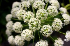 White circular flowers in the forest royalty free stock images