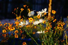 Wildflowers in the sunshine Stock Images