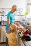 Woman gives a dog food while she prepares the meal Royalty Free Stock Images