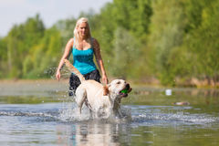 Woman plays with her labrador retriever in a lake Royalty Free Stock Photos