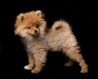 Picture of wonderful cute dog on a black background stock photo