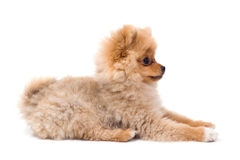 Picture of wonderful cute dog on a white background royalty free stock image