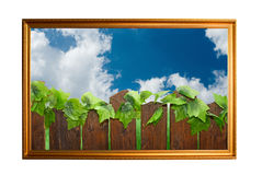 Picture of wood paling Royalty Free Stock Photo