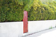 Picture of a wooden door painted with red color and red headge over stone basement. Contrast picture for landscape gardening. Design, green fence. Horizontal royalty free stock image