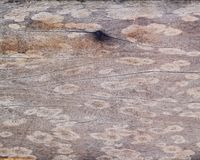 A picture of wooden texture background Royalty Free Stock Images