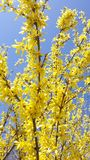Yellow flower on blue sky. Picture of yellow flower on blue sky Stock Photo