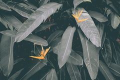 Yellow flowers with matte green leaves stock photos