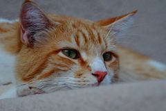 Yellow tabby cat eyes. A picture of a yellow tabby cat with light green eyes looking at me Stock Photos