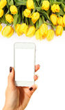 Picture of yellow tulips Royalty Free Stock Images