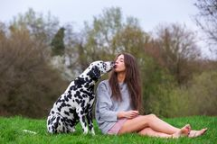 Young woman gets a kiss from a Dalmatian dog. Picture of a young woman who gets a kiss from a Dalmatian dog stock image