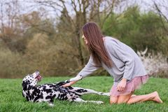 Young woman ruffles a dog`s belly. Picture of a young woman who ruffles a dog`s belly Stock Photography
