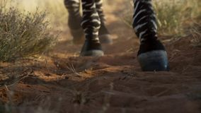 Picture of Zebra legs in the dirt stock image