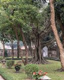 Banyan Tree in the second courtyard, Temple of Literature, Hanoi, Vietnam. Pictured is a Banyan free in the second courtyard of the Temple of Literature in Hanoi stock image