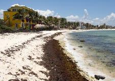 Beach, Half Moon Bay, North Akumal, Mexico Stock Image