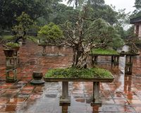 Bonsai Tree in the Thien Mu Pagoda in Hue, Vietnam. Pictured is a Bonsai Tree in the Thien Mu Pagoda in Hue, Vietnam. It was built in 1601 and is also called the royalty free stock image