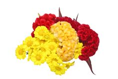 Bouquet of chrysanthemum and plumed cockscomb Stock Image