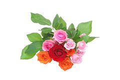Bouquet of roses in a white background Stock Images