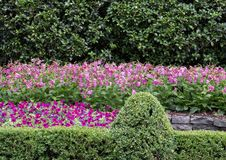Colorful flower bed at the Dallas Arboretum and Botanical Garden. Pictured is a colorful flower bed at the Dallas Arboretum.  From front to back are a mixture of Royalty Free Stock Image