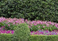 Colorful flower bed at the Dallas Arboretum and Botanical Garden. Pictured is a colorful flower bed at the Dallas Arboretum.  From front to back are a mixture of Royalty Free Stock Photos