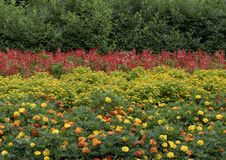 Colorful flower bed at the Dallas Arboretum and Botanical Garden. Pictured is a colorful flower bed at the Dallas Arboretum.  From front to back are a mixture of Stock Image