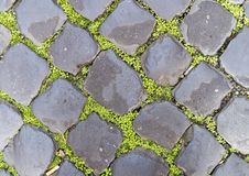 Green ground cover between grey paving stones, Rome Italy. Pictured is green ground cover growing between grey paving stones in Rome, Italy.  It creates Royalty Free Stock Image