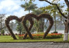 Hearts made of flowers with other red and yellow flowers and the Parfume River in the background during Tet in Hue, Vietam. Pictured are two hearts made of stock image