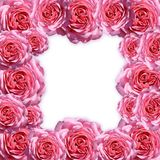 Pictureframe of roses Stock Photography