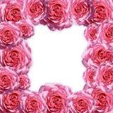 Pictureframe van rozen Stock Fotografie