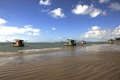 Pictures of Brazil. state of Alagoas Stock Images