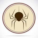 Pictures of brown spiders Stock Image