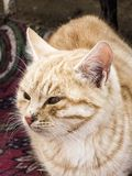 Pictures of cat looking in different directions, cat waiting for prey, cat eyes,.  stock photos